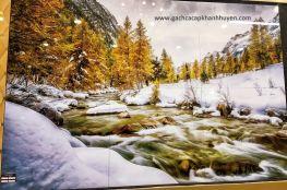 tranh rừng thông châu Âu